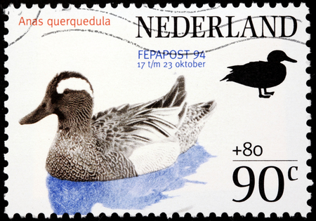 dabbling: NETHERLANDS - CIRCA 1994: A stamp printed by NETHERLANDS shows a small dabbling duck - Garganey (Anas querquedula), circa 1994