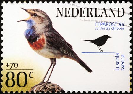 passerine: PAESI BASSI - CIRCA 1994: Un timbro stampato da Olanda mostra un piccolo uccello passerine - Pettazzurro (Luscinia svecica), circa 1994