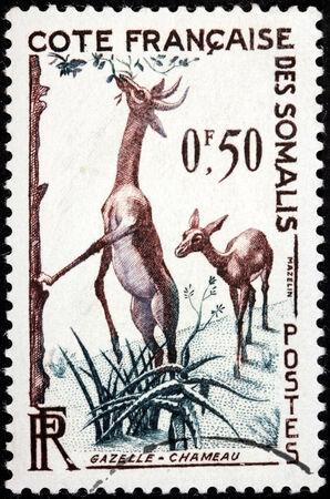 somalis: FRENCH SOMALI COAST - CIRCA 1958: A stamp printed by France shows Pair of Antelopes, circa 1958.