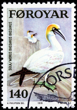 FAROE ISLANDS - CIRCA 1978: A stamp printed by FAROE ISLANDS shows Northern Gannet (Morus bassanus) - seabird and the largest member of the gannet family, Sulidae, circa 1978