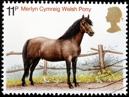 UNITED KINGDOM - CIRCA 1972: A stamp printed by GREAT BRITAIN shows Merlyn Cymreig Welsh Pony. Welsh breeds have had many uses as cavalry horse, pit pony, and as working farm animal, circa 1972