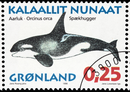 GREENLAND - CIRCA 1996: A stamp printed by DENMARK shows image of The Killer Whale (Orcinus orca), also referred to as the Orca Whale or Orca, and less commonly as the Blackfish, circa 1996