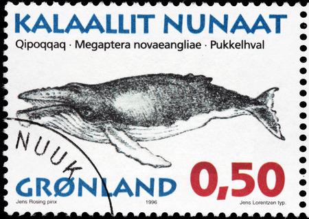 baleen whale: GROENLANDIA - alrededor de 1996: Un sello impreso por Dinamarca muestra im�genes de la ballena jorobada (Megaptera novaeangliae) - una especie de ballena, alrededor de 1996 Editorial
