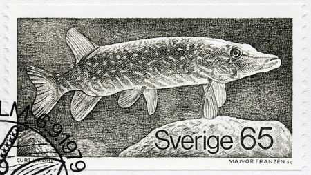northern pike: SWEDEN - CIRCA 1979: A stamp printed by SWEDEN shows The northern pike (Esox lucius), known simply as a pike, also called jackfish or simply northern in the Upper Midwest of the USA, circa 1979 Editorial