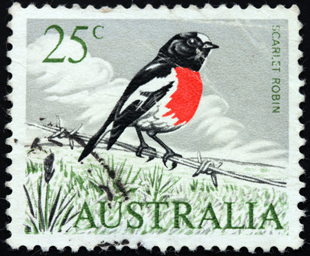 australasian: AUSTRALIA - CIRCA 1978: a stamp printed by AUSTRALIA shows Eastern Scarlet Robin (Petroica boodang) - a common red-breasted Australasian robin, circa 1978.