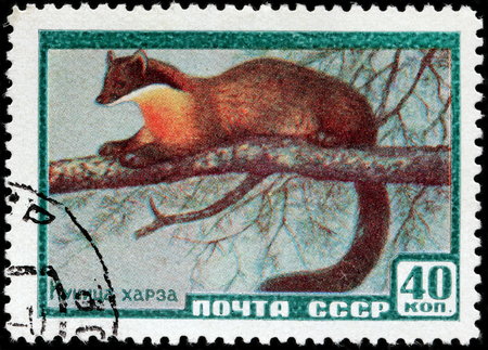 RUSSIA - CIRCA 1959: A stamp printed by USSR shows yellow throated marten (Martes flavigula), circa 1959