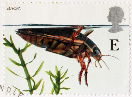 UNITED KINGDOM - CIRCA 2001: A stamp printed by UNITED KINGDOM shows closeup of Great Diving Beetle, circa 2001