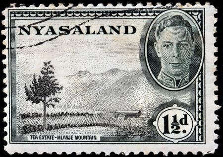 protectorate: NYASALAND - CIRCA 1945: A stamp printed by NYASALAND shows view of Tea Estate - Mlanje Mountain, circa 1945