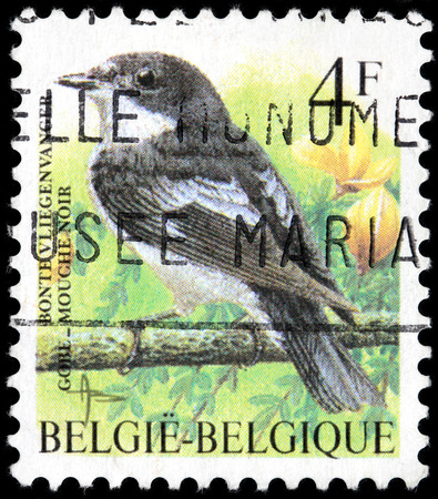 passerine: BELGIUM - CIRCA 1996: A stamp printed by BELGIUM shows The European Pied Flycatcher - a small passerine bird in the Old World flycatcher family, circa 1996.