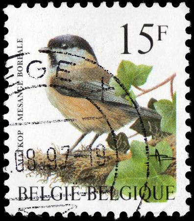 passerine: BELGIO - CIRCA 1997: Un timbro stampato dalla Belgio mostra The Willow Tit - un uccello passeriforme della famiglia tit Paridae, circa 1997.