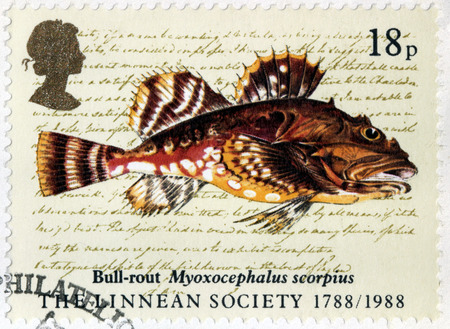bullhead fish: UNITED KINGDOM - CIRCA MAY, 1988: A stamp printed by UNITED KINGDOM shows shorthorn sculpin known as short-spined sea scorpion, bull-rout, father-lasher - a fish of the Northern Atlantic