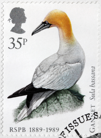 seabird: UNITED KINGDOM - CIRCA 1989: A stamp printed by GREAT BRITAIN shows The Northern Gannet - a seabird and the largest member of the gannet family, Sulidae, circa 1989