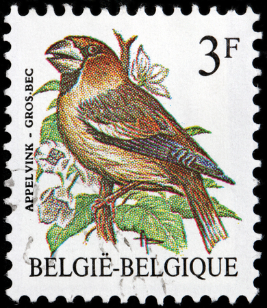 passerine: BELGIUM - CIRCA 1985: A stamp printed by BELGIUM shows The Hawfinch - a passerine bird from the finch family Fringillidae, circa 1985.
