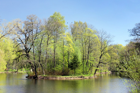 Small island on a pond edged by green trees at sunny spring day.