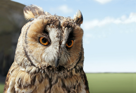 The Boreal Owl. In Europe, it is typically known as Tengmalms owl after Swedish naturalist Peter Gustaf Tengmalm or Richardsons owl after Sir John Richardson. Shallow depth, selective focus. Stock Photo