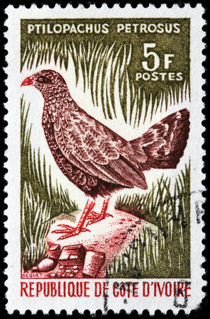 kuropatwa: LUGA, RUSSIA - JUNE 25, 2016: A stamp printed by REPUBLIC COTE DIVOIRE shows Stone Partridge - a largely brown bird of the new world quail family, which commonly holds its tail raised, circa 1966