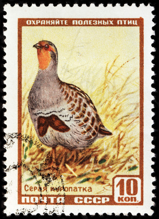kuropatwa: LUGA, RUSSIA - NOVEMBER 6, 2016: A stamp printed by USSR (RUSSIA) shows The Grey Partridge (Perdix perdix), also known as the English partridge, Hungarian partridge, or hun, circa 1957
