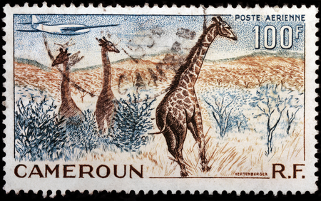 LUGA, RUSSIA - OCTOBER 12, 2017: A stamp printed by CAMEROON shows African landscape wiith giraffes, circa 1955