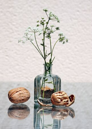 Wild flowers in a small glass bottle, whole walnut and walnut kernel with amazing reflections against high key background with space for text. Choose a focal point.