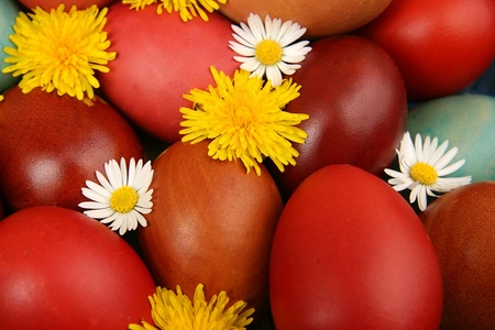 Camomile and dandelion among easter eggs Stock Photo - 16859226