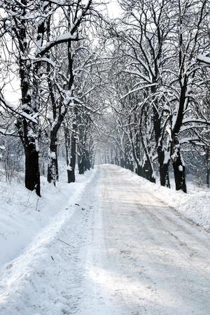 Seasonal photo - Santa road trail Stock Photo