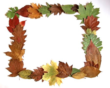 Autumn leaves frame Stock Photo - 16925950