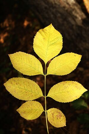 Yellow autmn leaves Stock Photo - 16953568