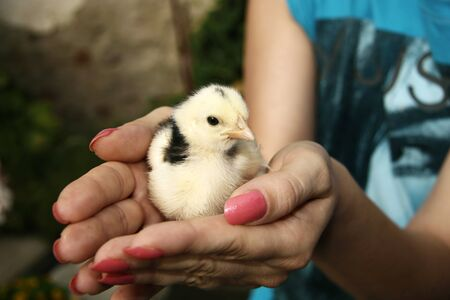 Holding a little chick Stock Photo - 16953231