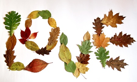 Love autumn leaves Stock Photo - 16953783