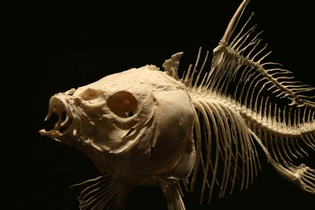 Fish skeleton under the light on the dark background