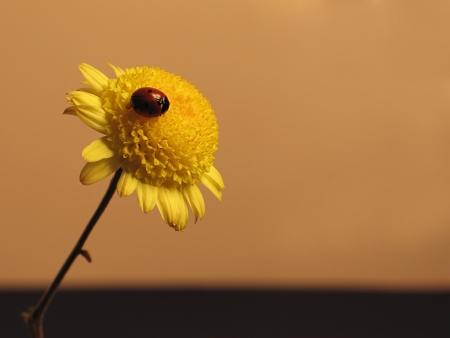 Sunrise on the flower