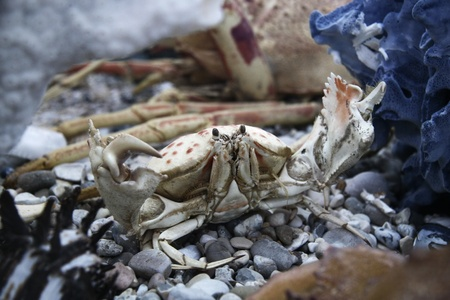 Crab on the sea bottom Stock Photo - 17131820