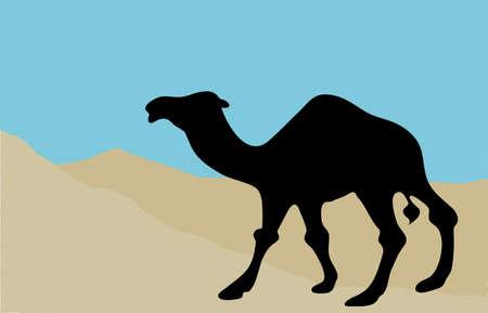 lybia: Camel silhouette in desert