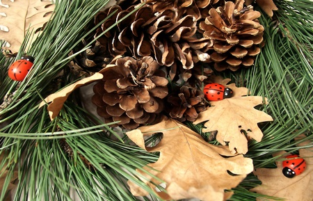 Pine cones pine tree branch, ladybird and oak leaf