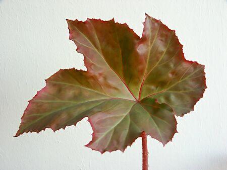 Strange leaf Stock Photo