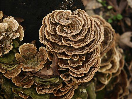 Fungus on a log