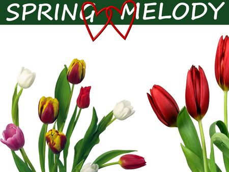 Tulips on Spring melody Stock Photo