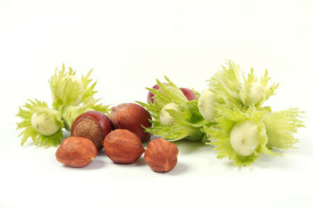 Group of fruits of a nut tree on a white background.