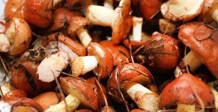 jacks: Texture - forest autumn mushrooms slippery jacks
