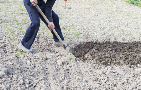 digging: The process of digging the soil using shovels Stock Photo