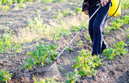 pesticide: Spraying pesticide of potatoes leaves in the garden Stock Photo