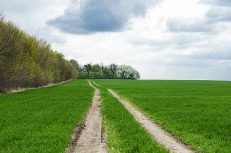 green wheat: Landscape - land road in the green wheat field