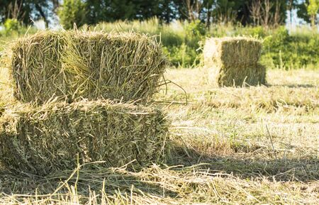 cubic: Cubic bales of dry hay in farm field