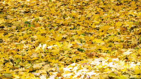 colourful lightings: Various fallen yellow leaves in autumn forest