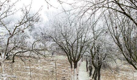white winter: Winter landscape - white frost on trees in the garden