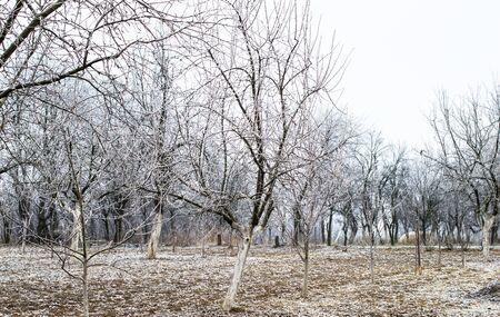 frost winter: Winter landscape - white frost on trees in the garden