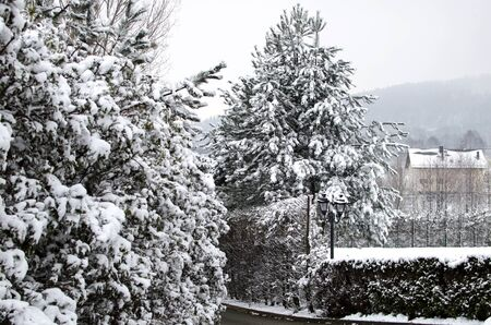 Christmas landscape - trees covered with white snow in winter season