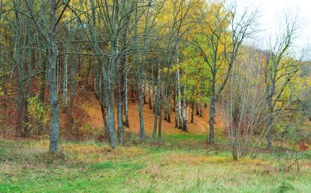 Landscape - trees with yellow leaves in autumn season Reklamní fotografie