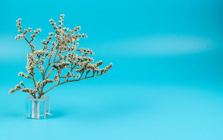 Still life of a dried flower in a glass stand on a turquoise background Stock Photo