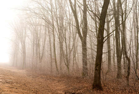 Foggy morning in the forest with trees without leaves and shrubs